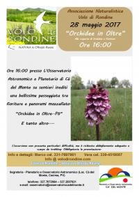 Orchidee in Oltre..PO'